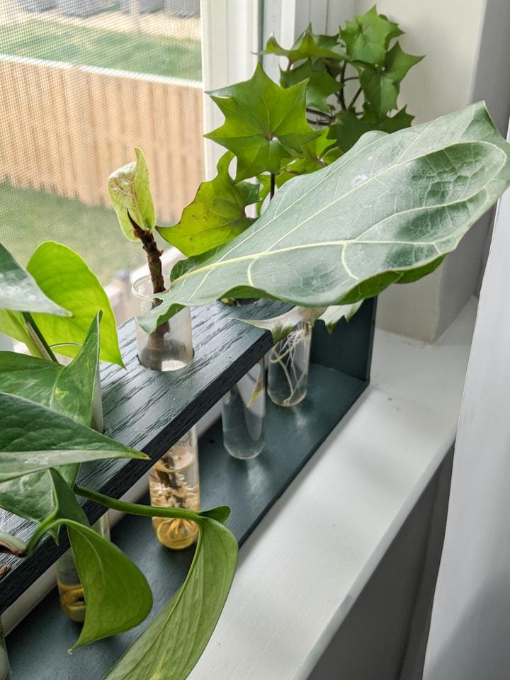 plants in a DIY test tub propagation station