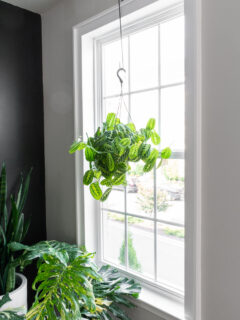 windows with white trim and a hanging plant