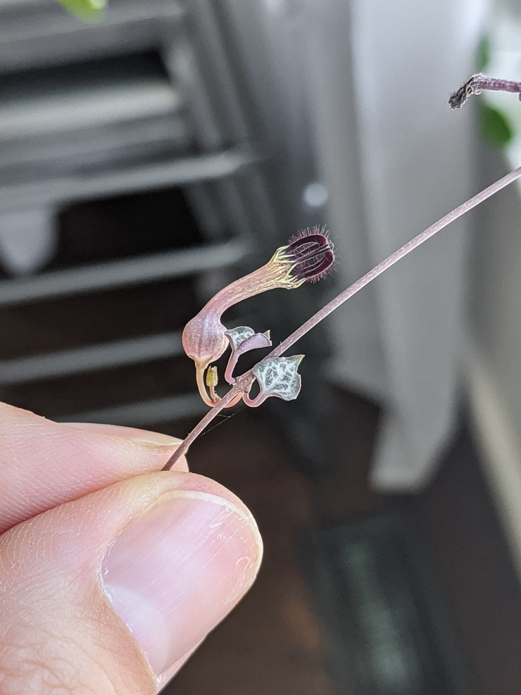 flower on a string of hearts