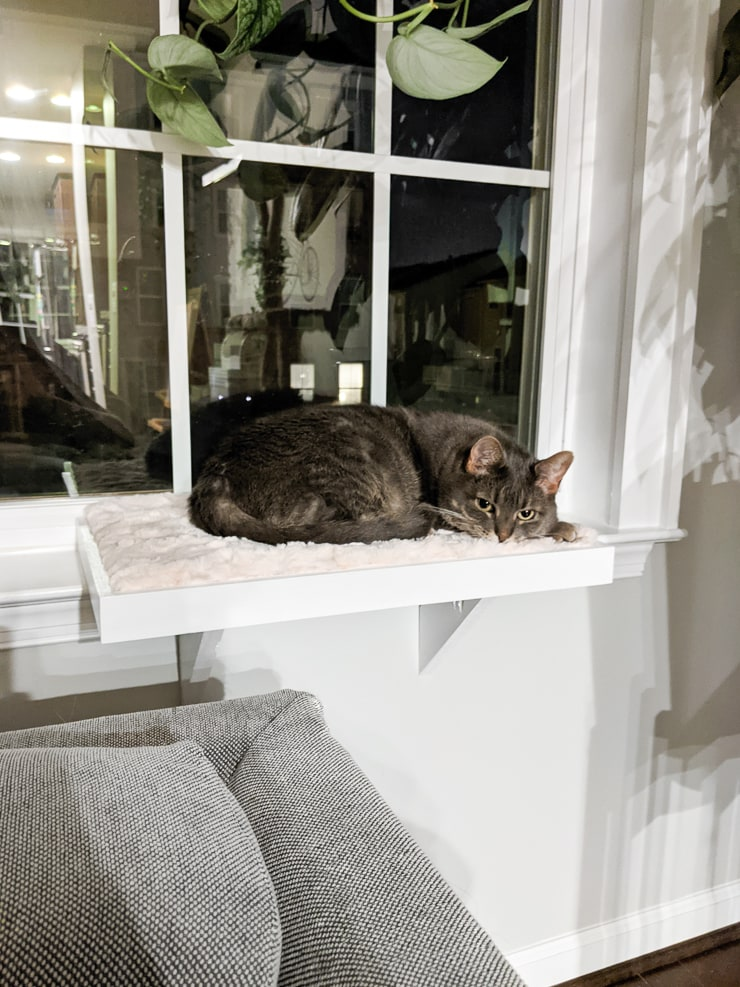 cat laying on a white DIY window bed