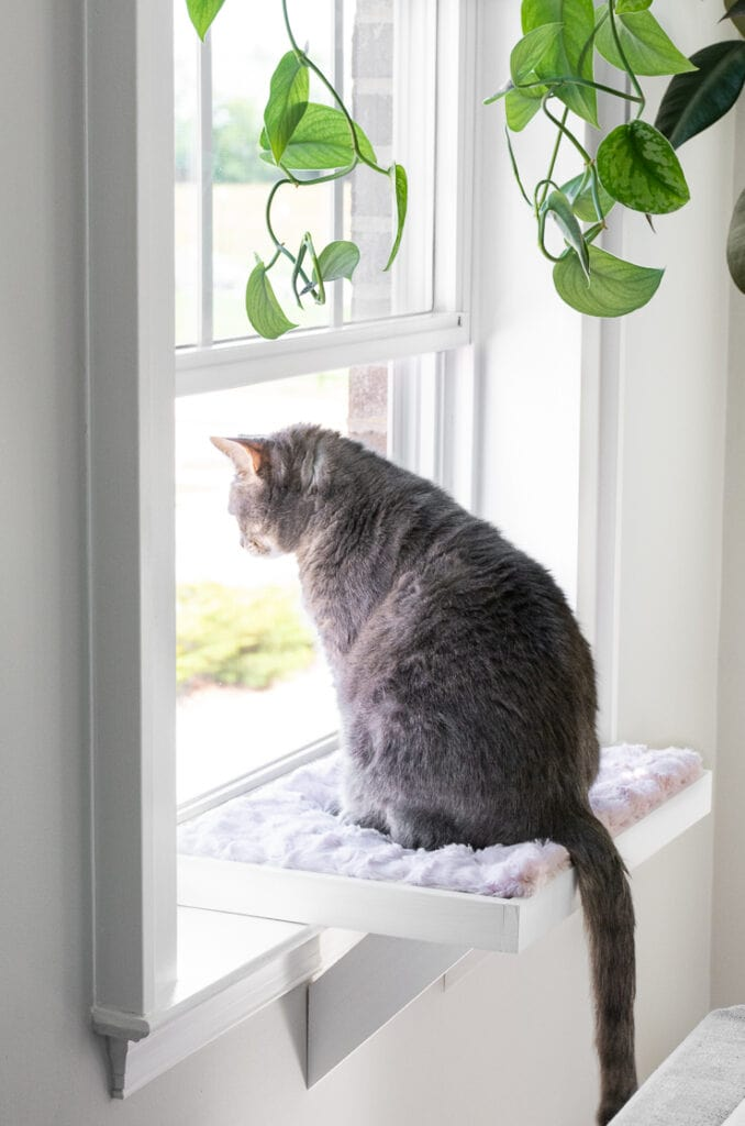 DIY cat window perch painted white with a faux fur cushion and a cat looking out the window