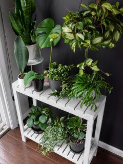 DIY tiered indoor plant stand