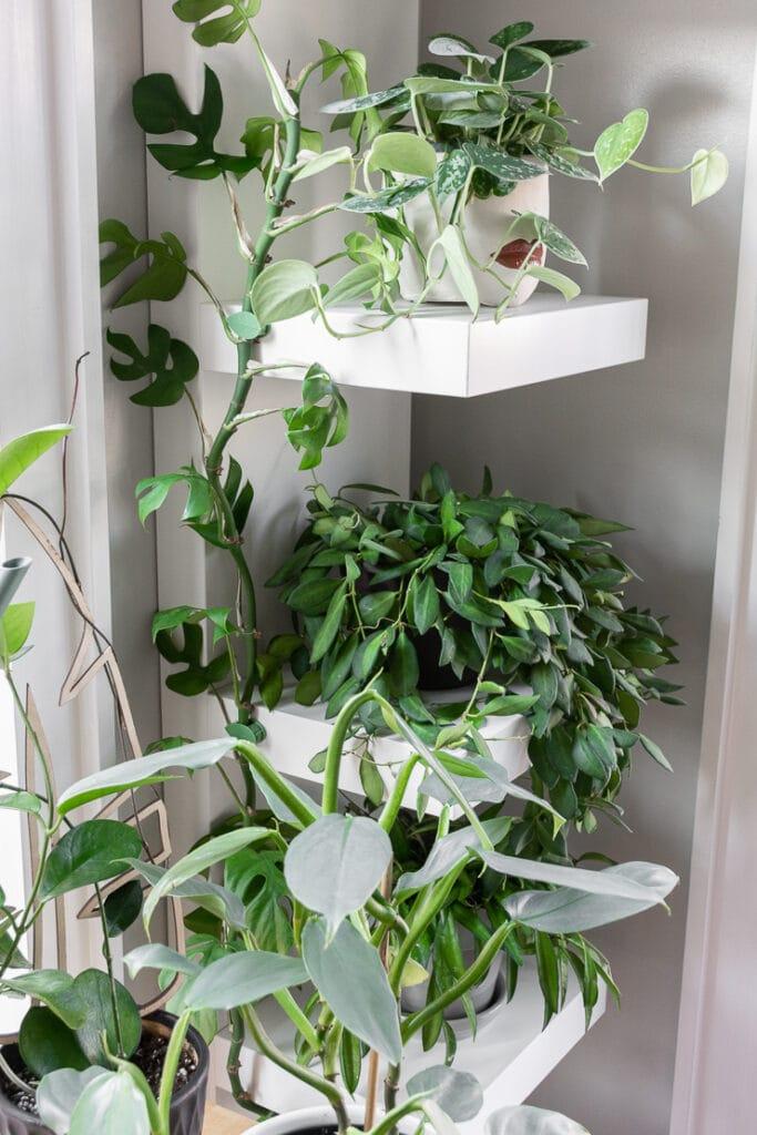 beautiful plants on white Ikea lack shelving