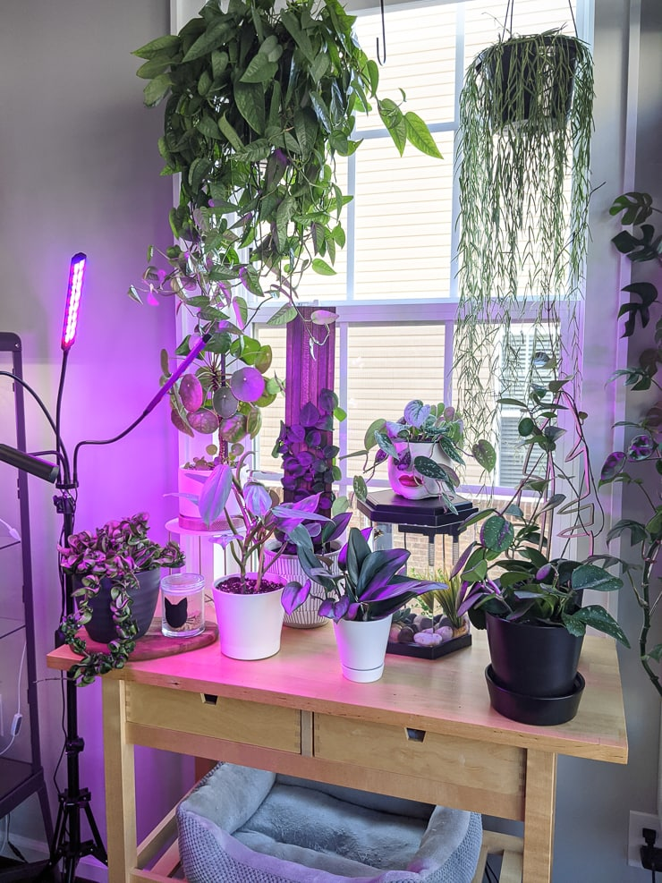 lighting example for plants over winter