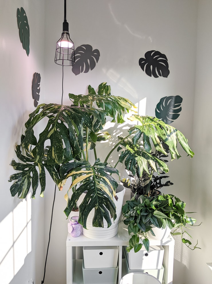 hanging grow light over a thai constellation indoors