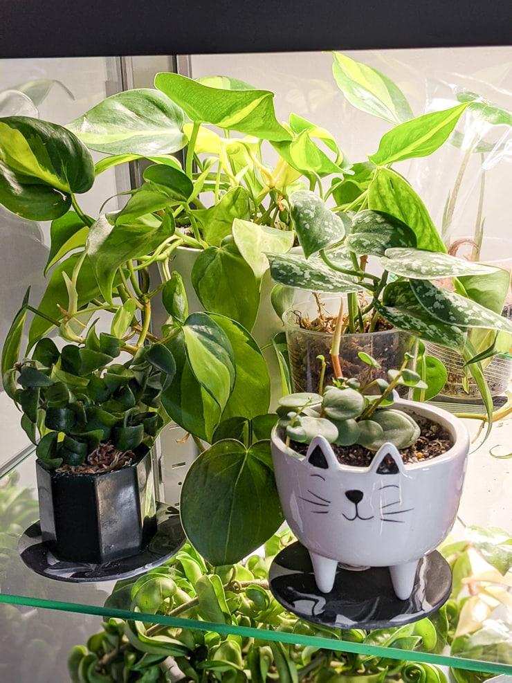 plants in an Ikea greenhouse cabinet