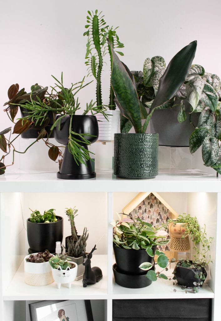 plants on white shelving in a room with grow lights