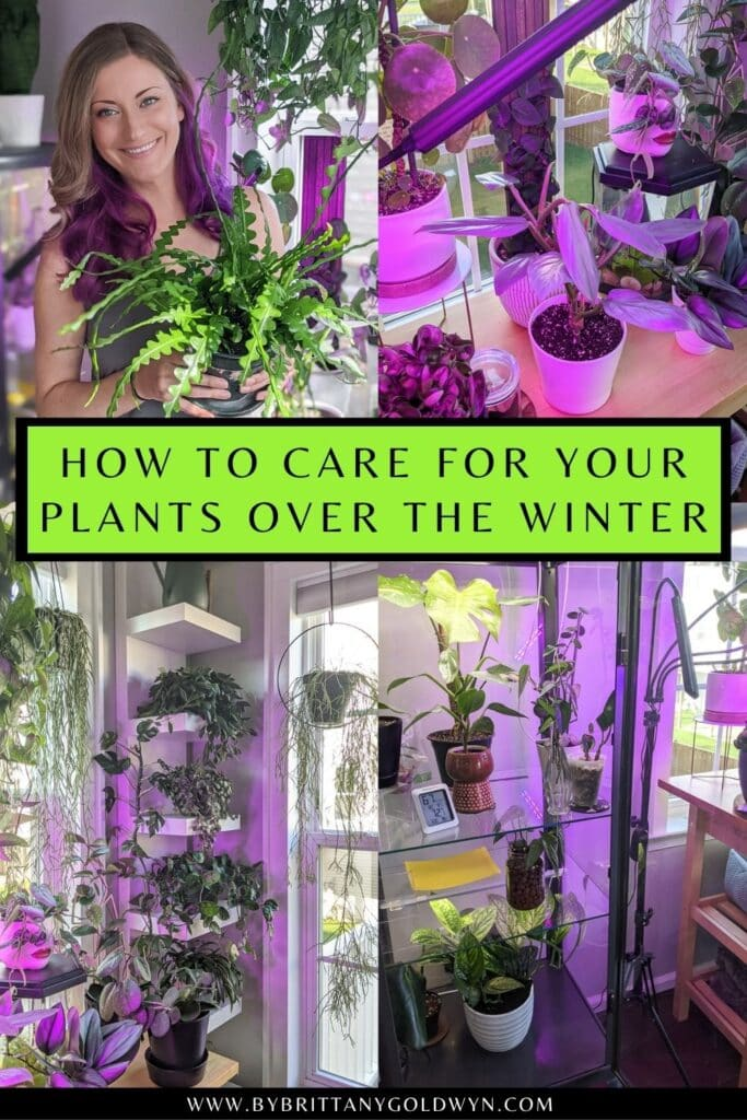 pinnable graphic about how to care for houseplant over the winter including images and text overlay