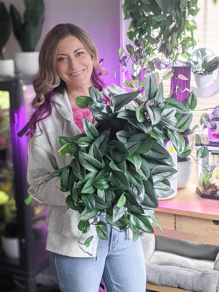 woman holding a huge scindapsus treubii moonlight plant