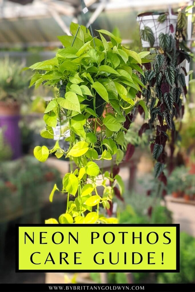 pinnable graphic about neon pothos care guide including an image and text overlay